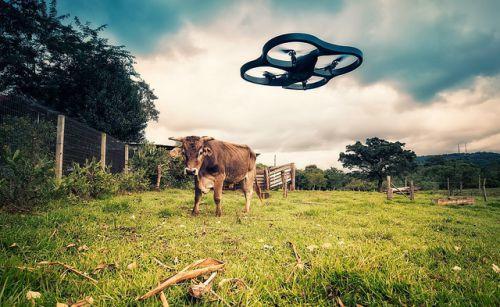 Drone_vs_cow
