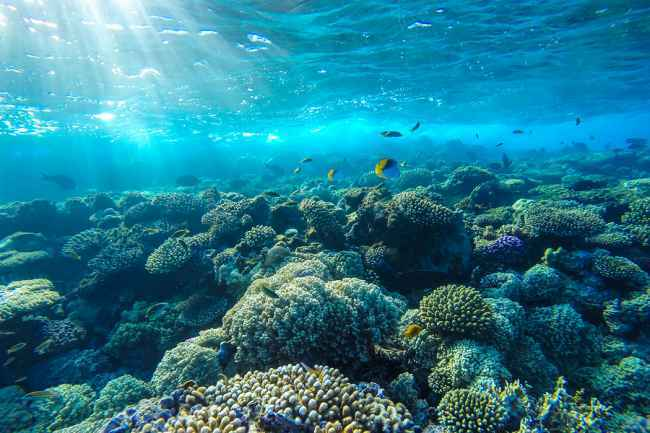 underwater fishing drone