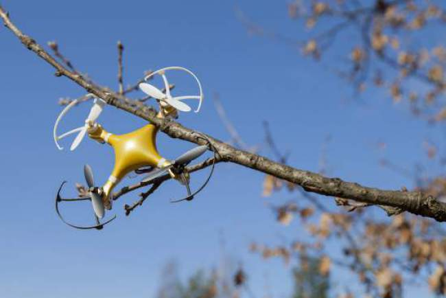 Drone in tree