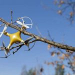 6 Quick Ways to Get a Drone Out of a Tree