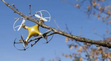 8 Quick Ways to Get a Drone Out of a Tree