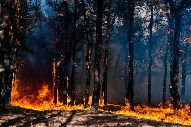 fighting wildfire